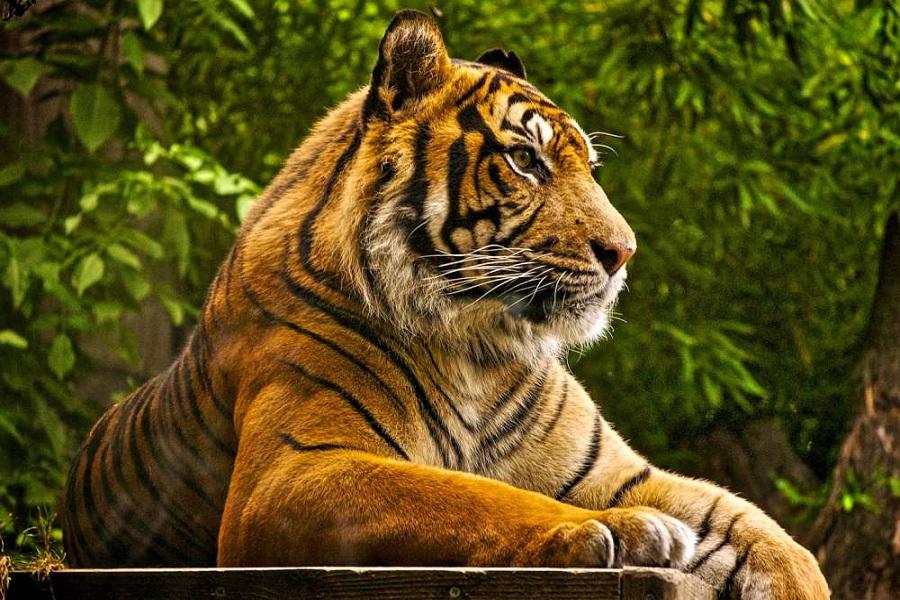 Golden Triangle & Tiger Tour