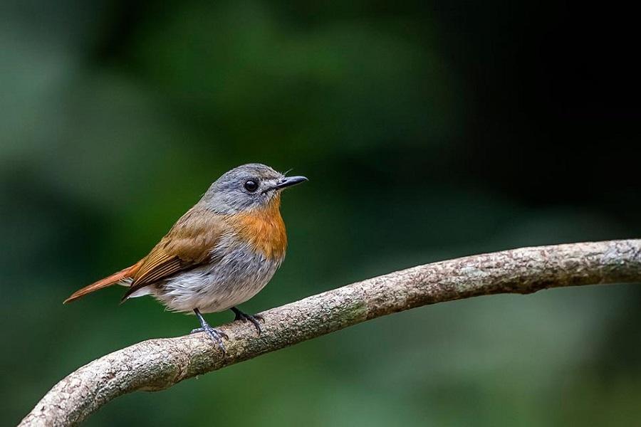 North India Birding Tour