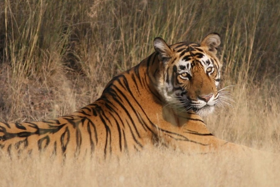 Golden Triangle Tour with Wildlife of India