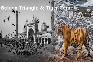 Golden Triangle & Tiger Tour